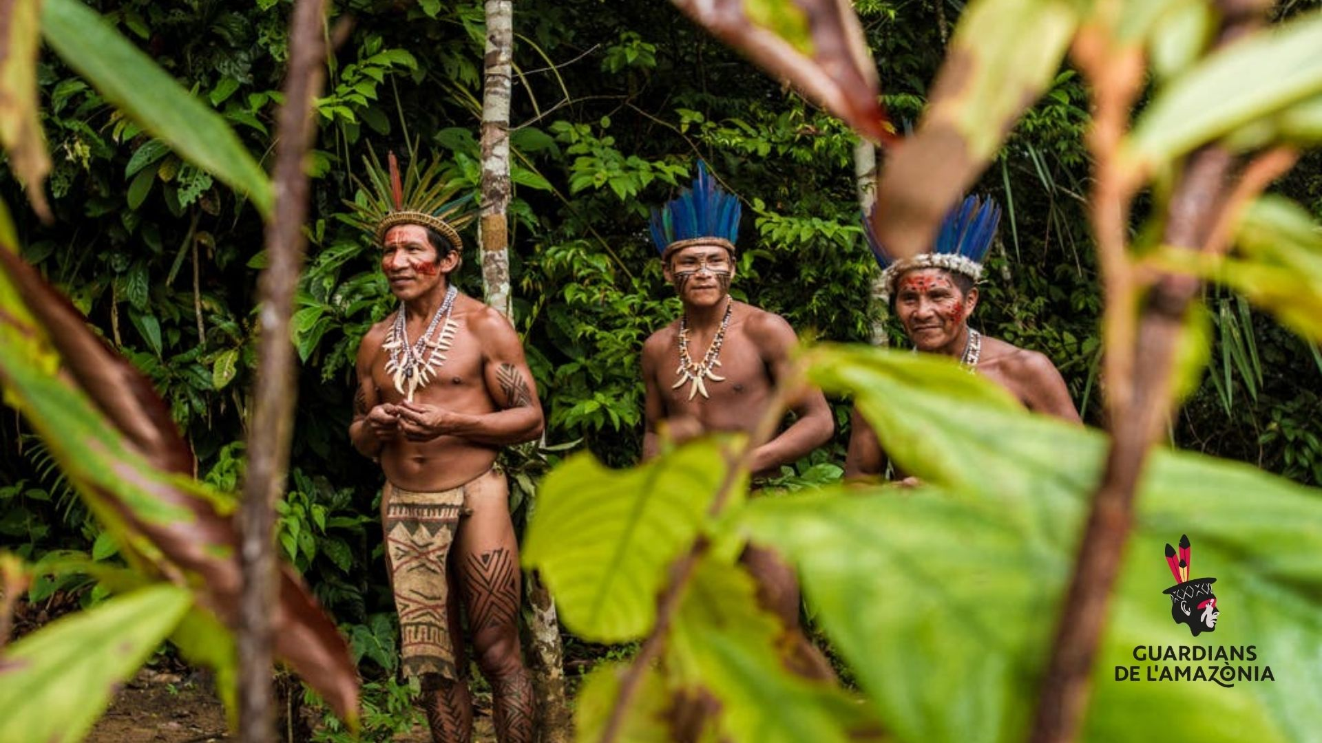 Remedios indígenas amazónicos